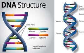 Human Genome Project :