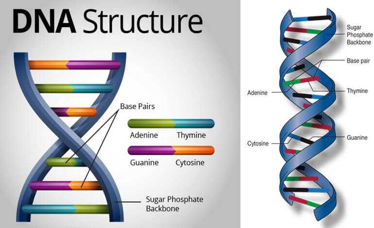 Human genome project tech tomorrow human genome project ccuart Choice Image